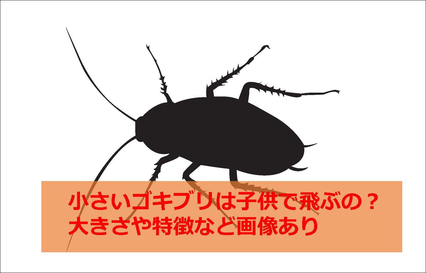 小さいゴキブリは子供で飛ぶの?大きさや特徴など画像あり